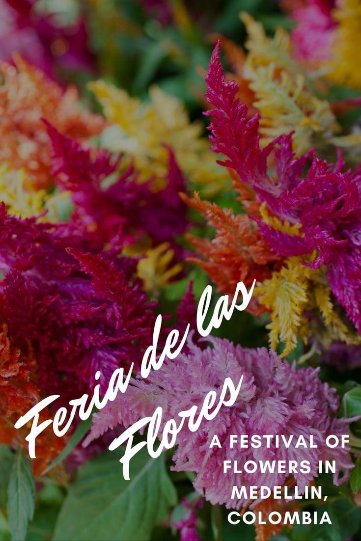 La Feria en Mi Casa: Feria de las FloresA festival of flowers, Feria de las Flores, in Medellin, Colombia.