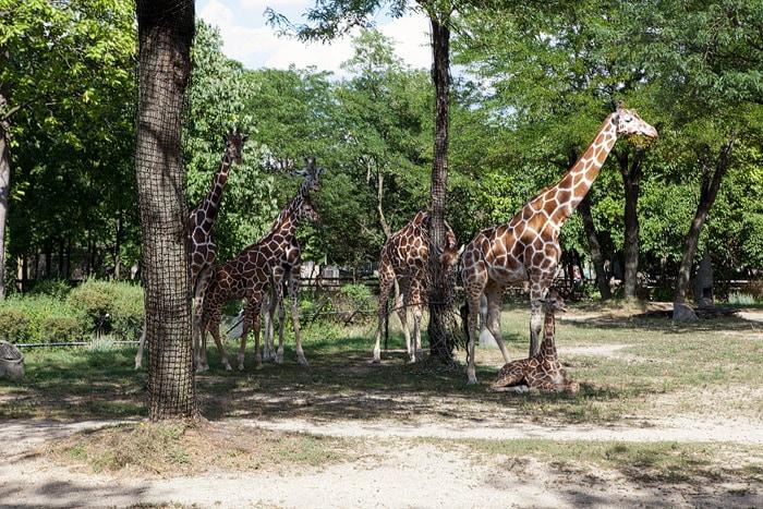 Brookfeld Zoo
