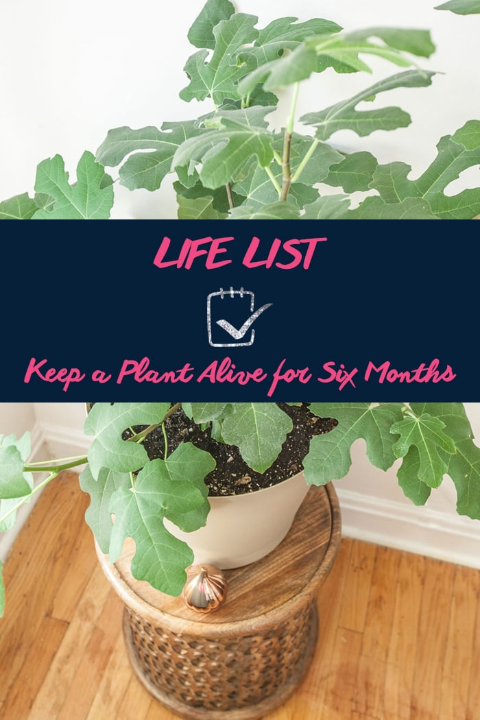 Life List: Keep a plant alive for six months.