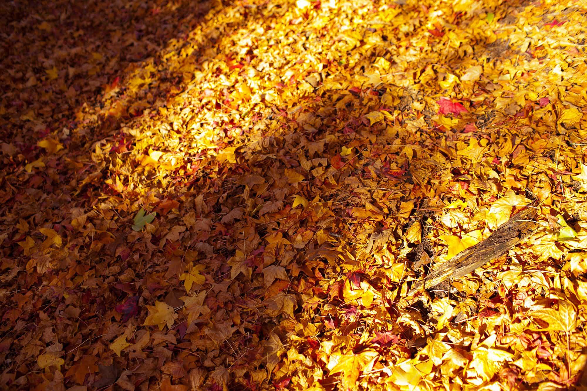 Allerton Park in Monticello, Illinois.