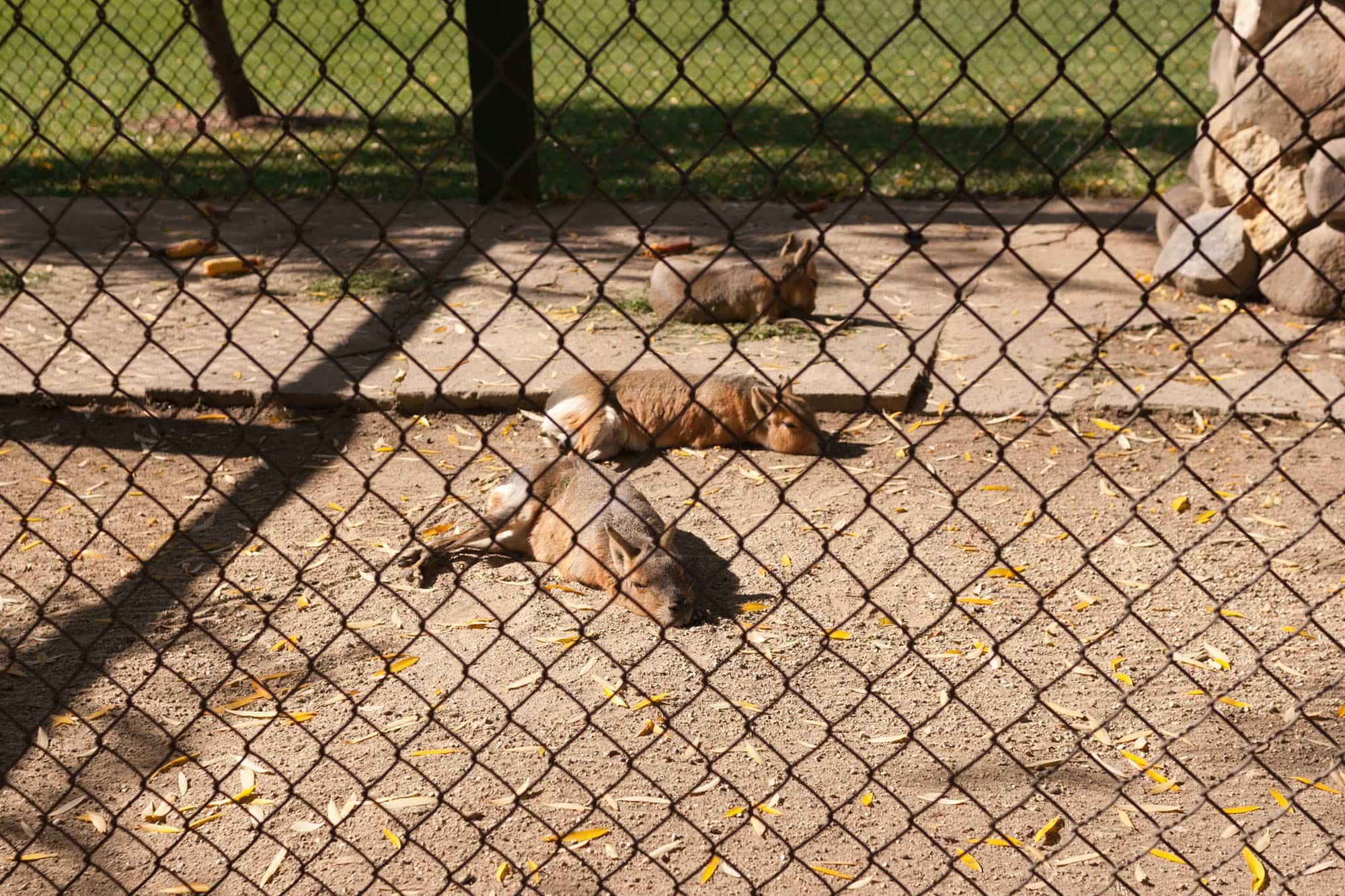 Jackalope at Bear Den Zoo and Petting Farm in Wisconsin