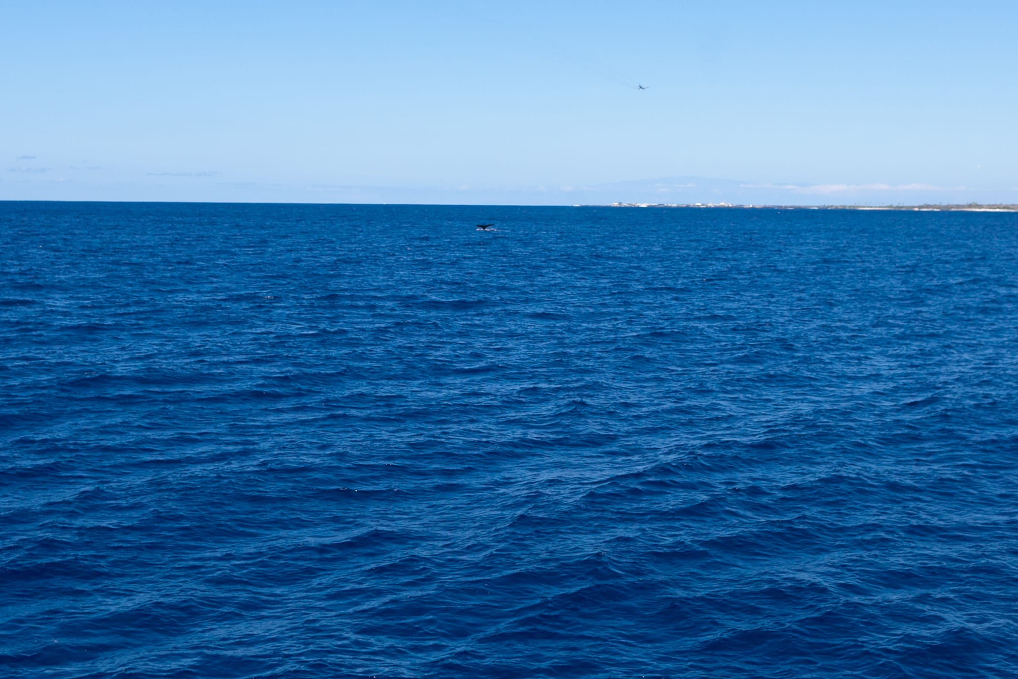Whale watching in Kona on the Big Island in Hawaii.