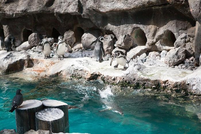 Brookfield Zoo