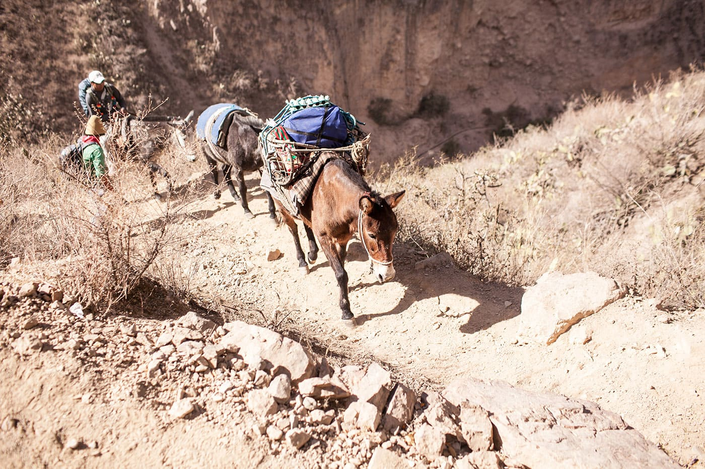 Colca Canyon Trek in Peru - trekking Colca Canyon, and not getting a mule to take me to the top.