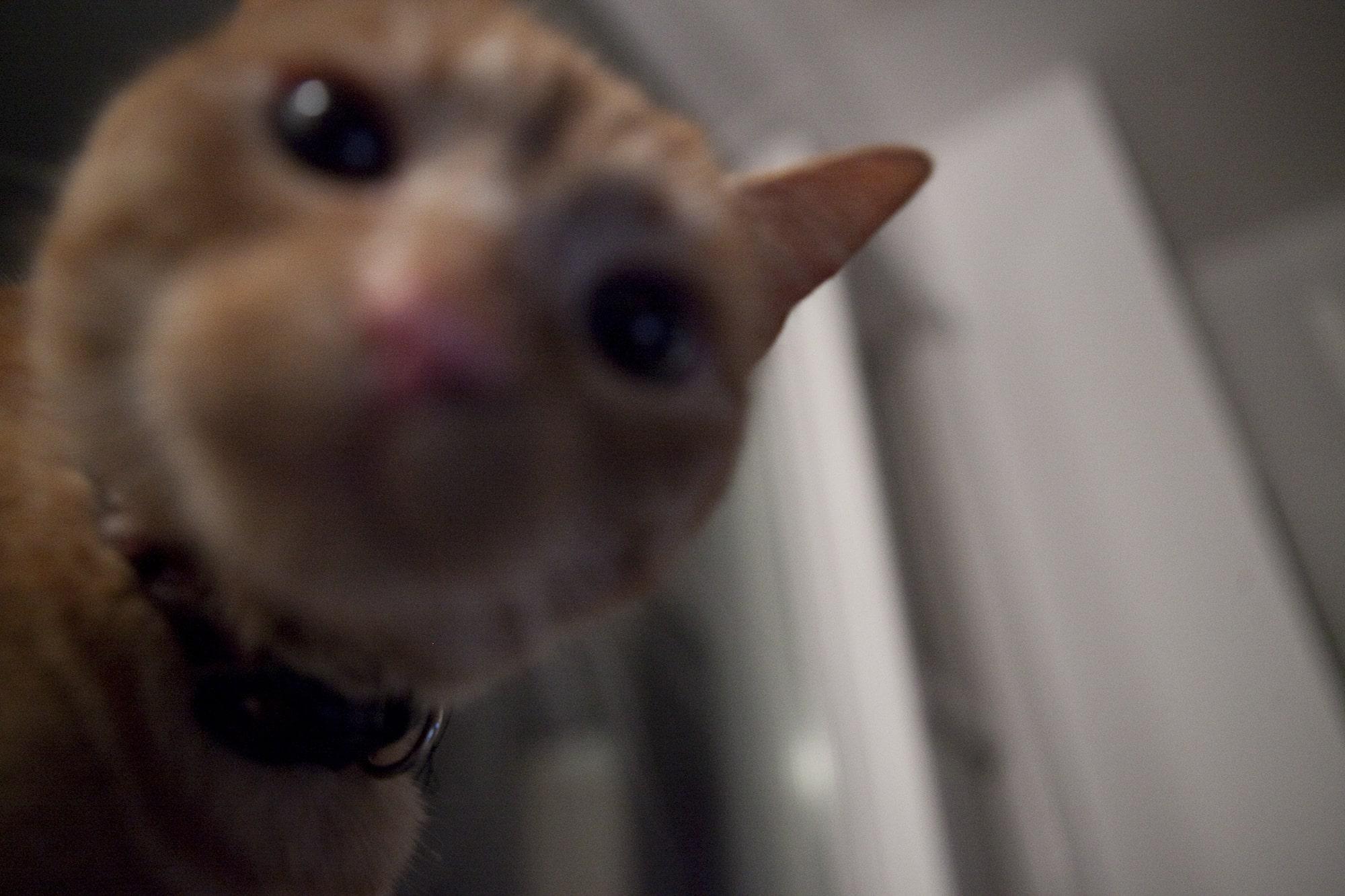 Kitty Bo