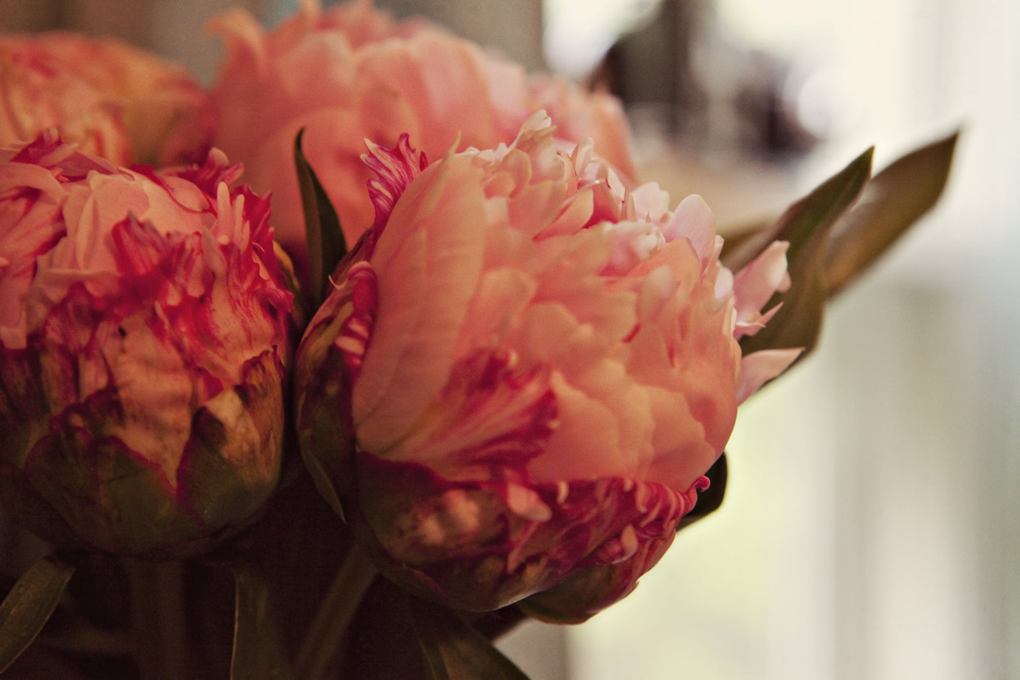 Peonies - my one-thousandth blog post.