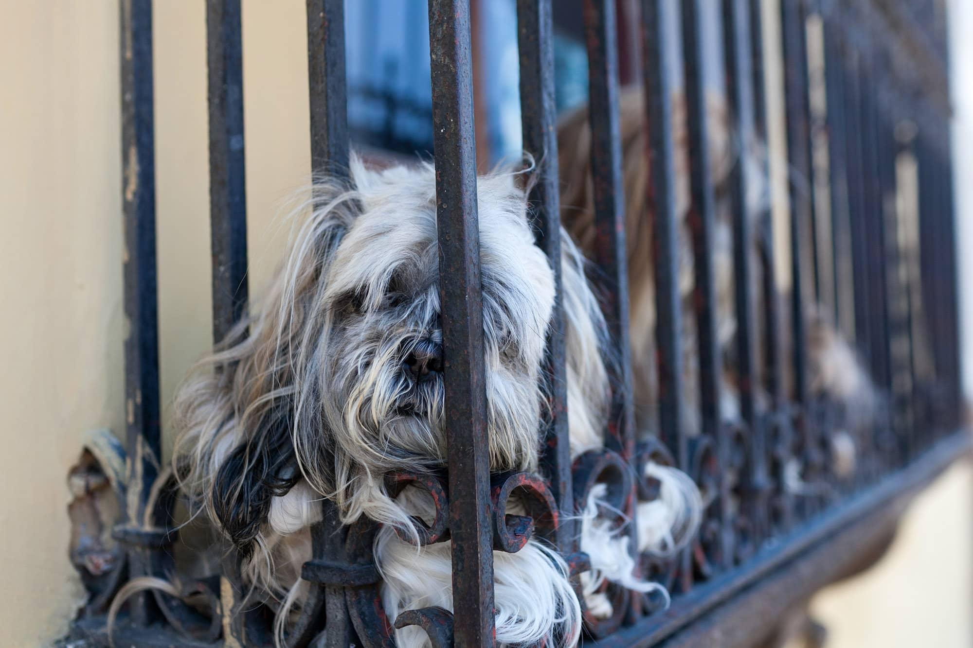 Doggy in the window in Antigua, Guatemala