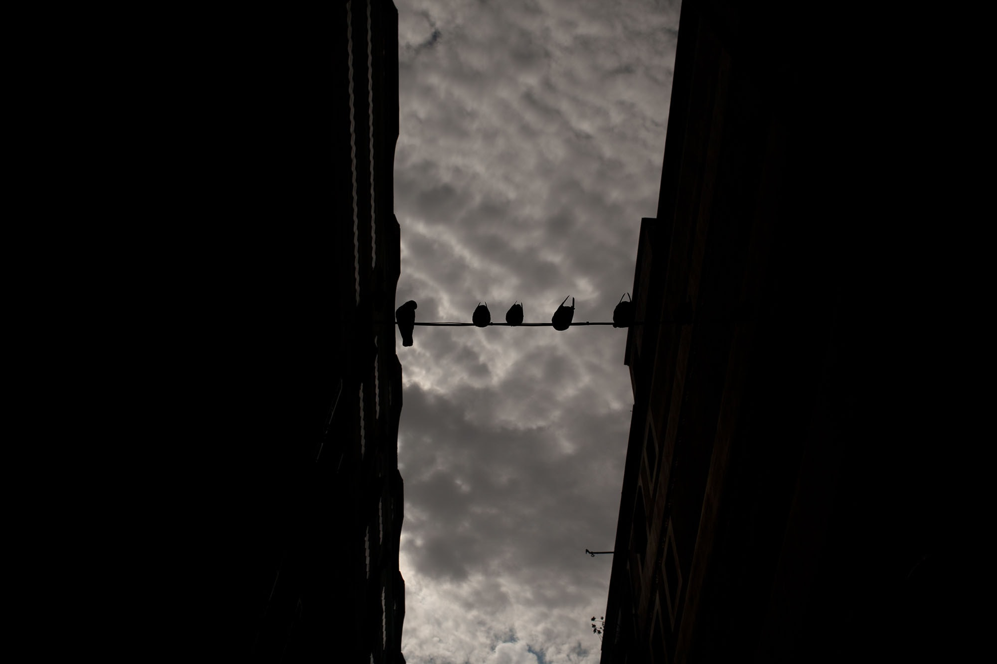 Birds on a wire in Barcelona, Spain