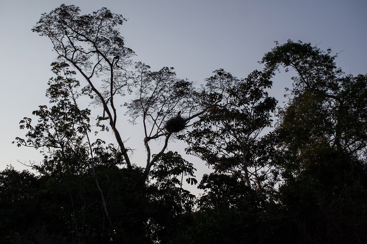Bird - The Pampas in the Bolivian Amazon