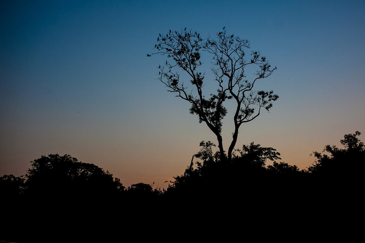 The Pampas in the Bolivian Amazon