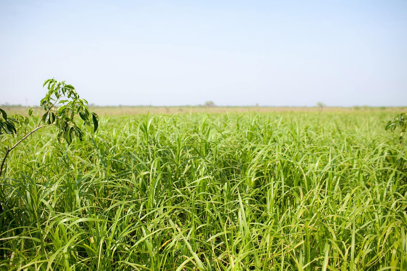 Field - The Pampas in the Bolivian Amazon