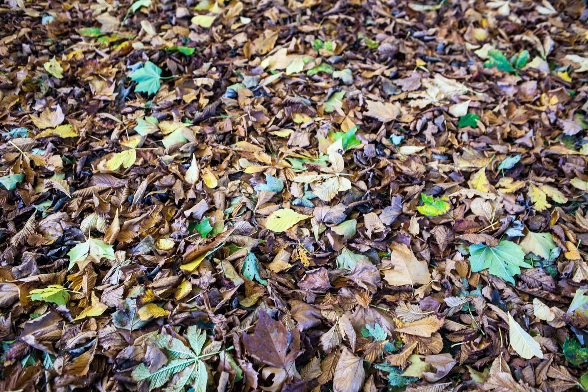 Autumn leaves in Dublin, Ireland