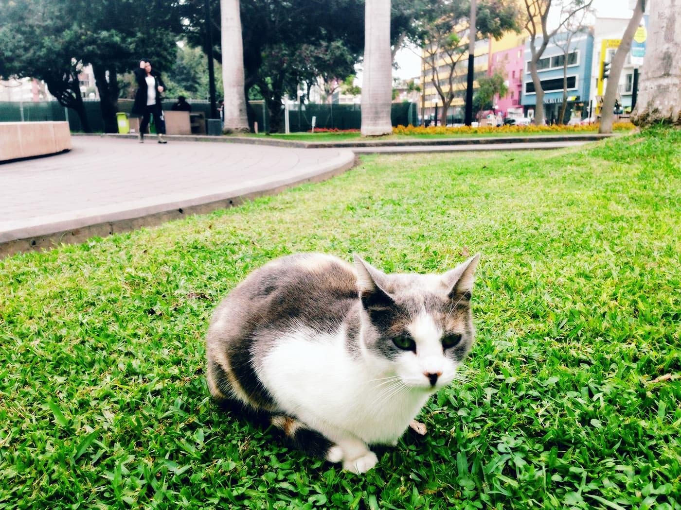 Cats in Parque Central de Miraflores in Lima, Peru
