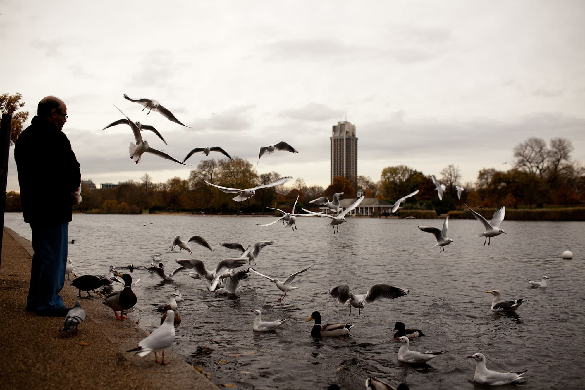 Feeding birds at Hyde Park in London, England