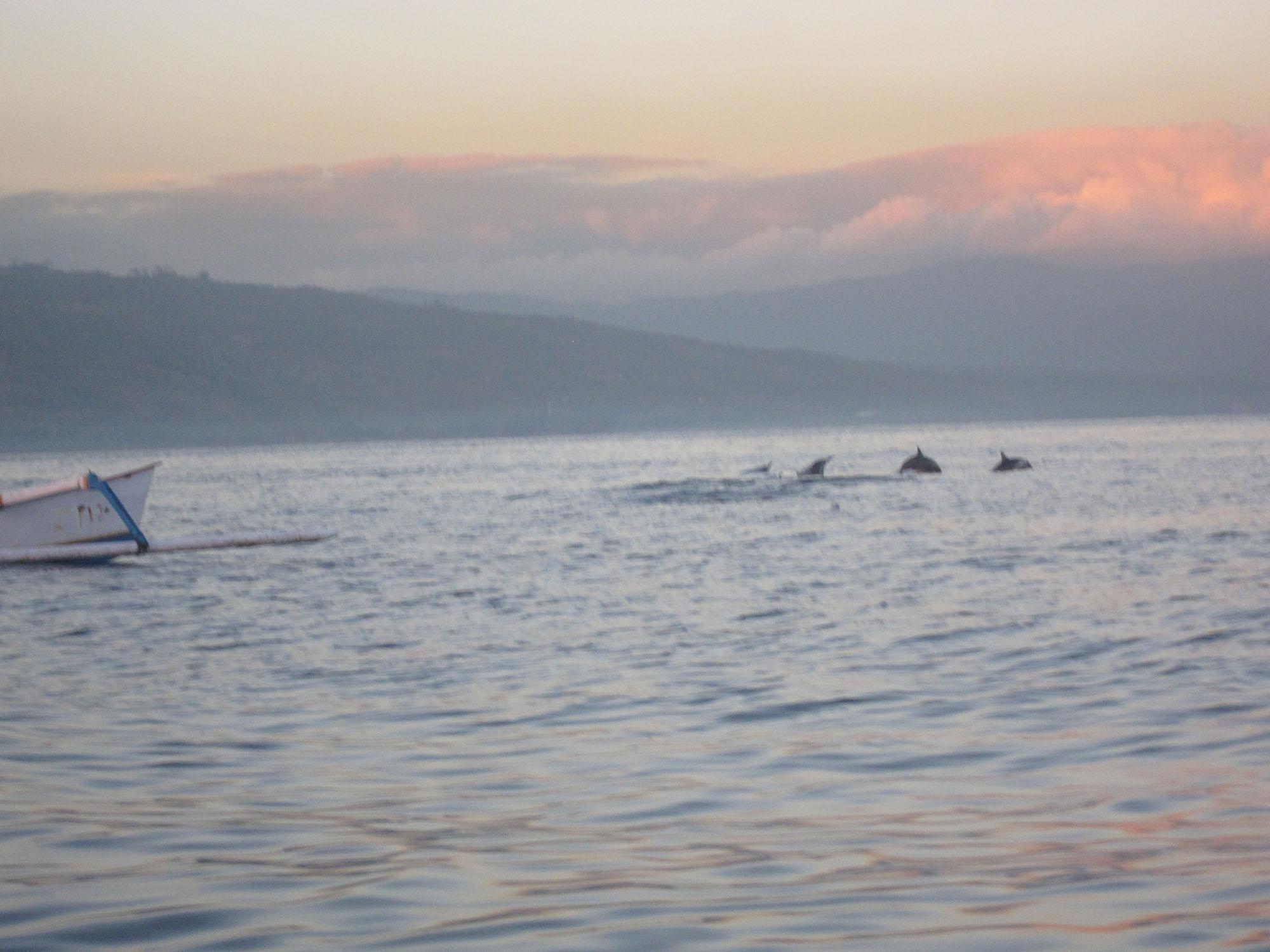 Lovina Beach Dolphin watching in Lovina, Bali, Indonesia