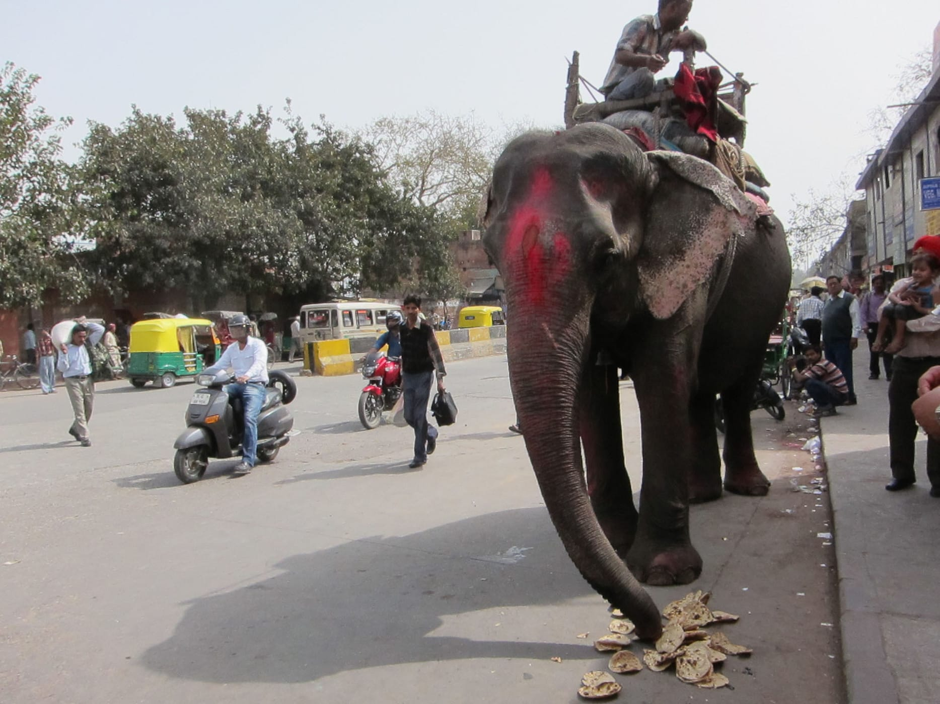 Elephant on the streets of New Delhi, India.