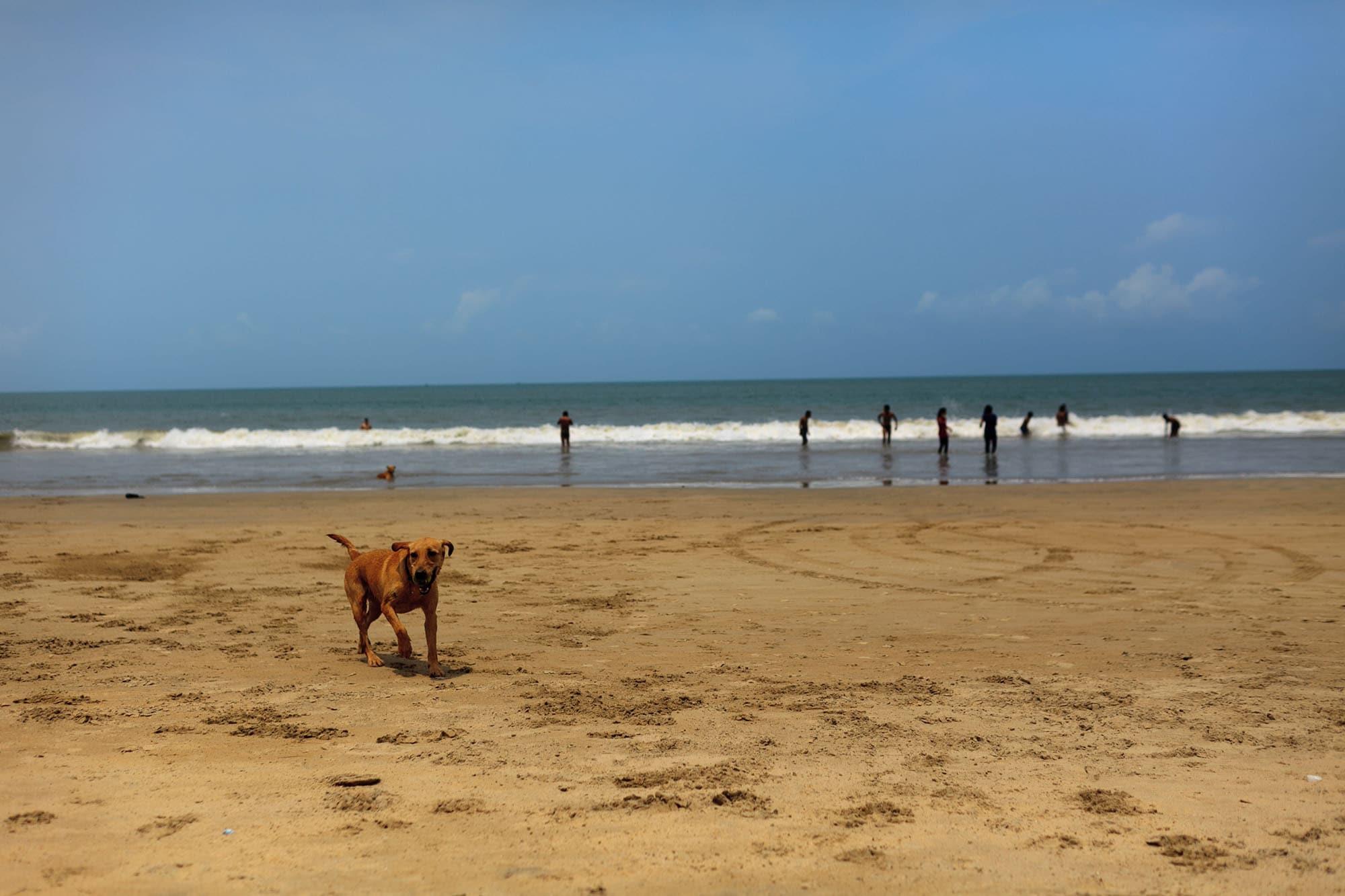 dog on the beach in Palolem, Goa, India.
