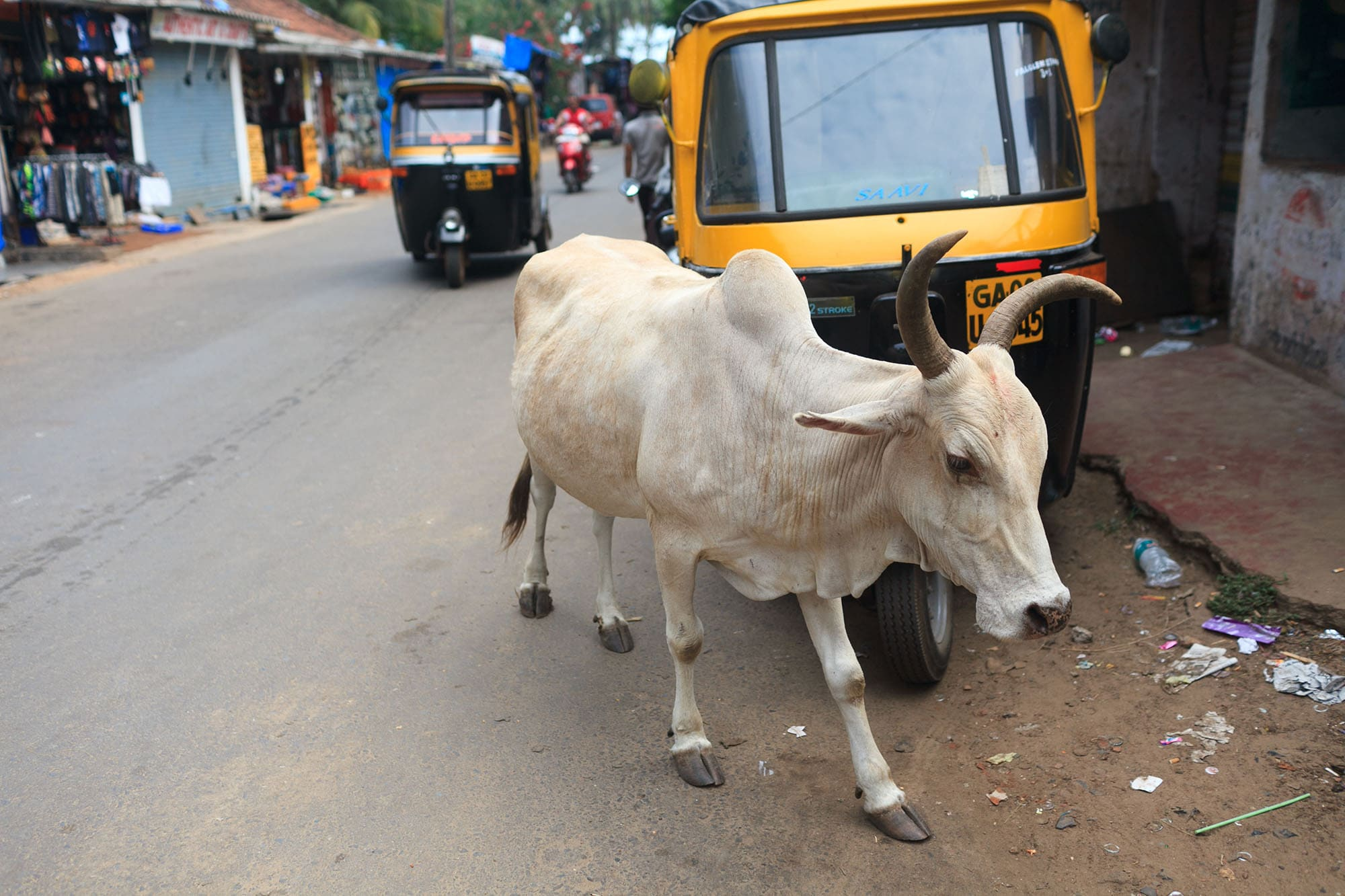 A cow and a rickshaw in Palolem, Goa, India.
