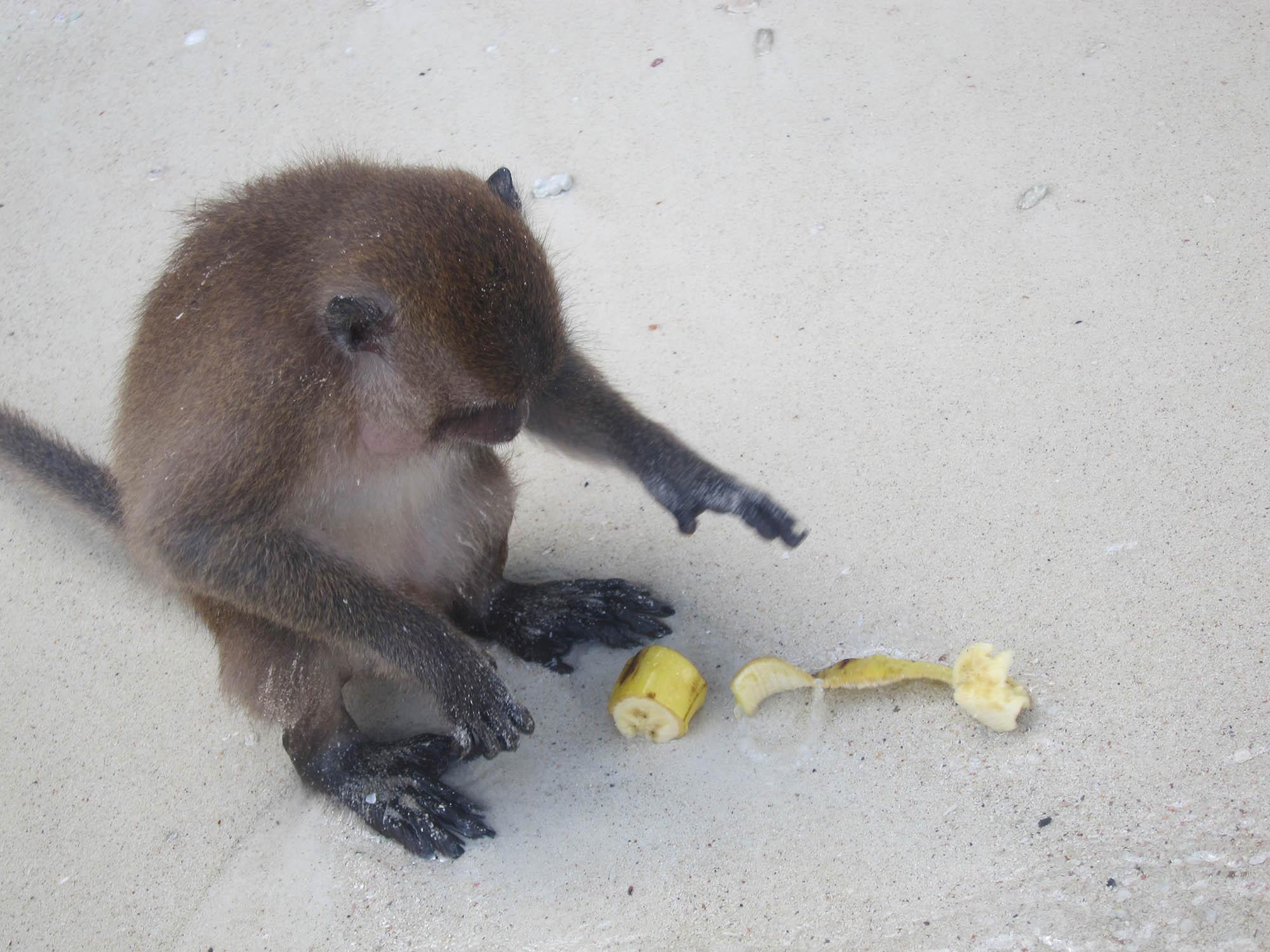 Koh Phi Phi Island Booze Cruise - Ton Sai Bay, Monkey Beach