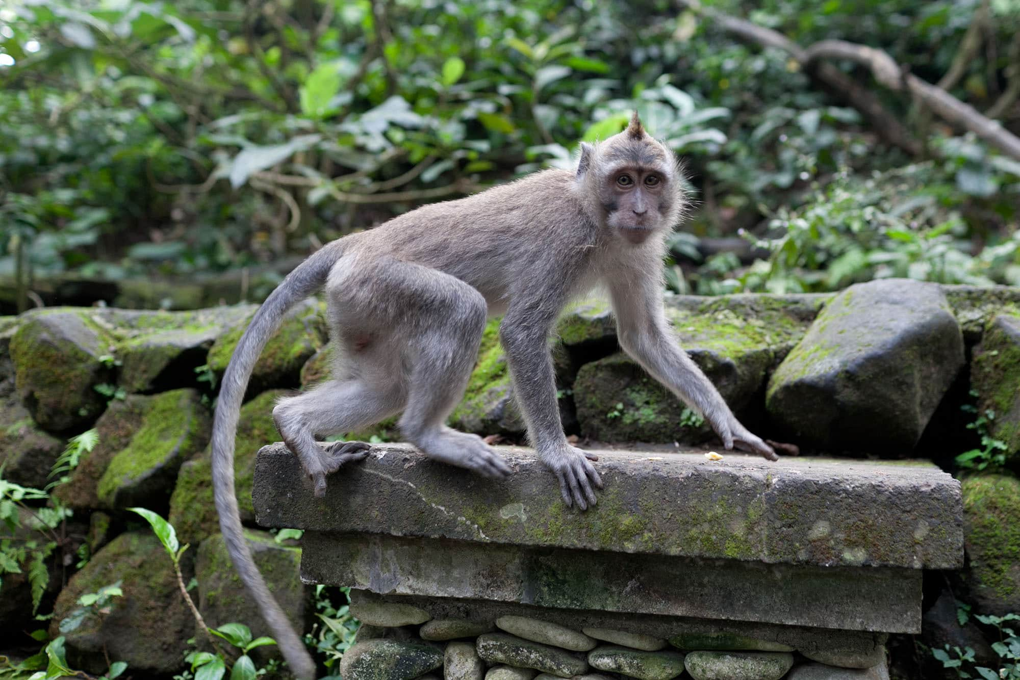 Monkey Forest in Ubud, Bali, Indonesia