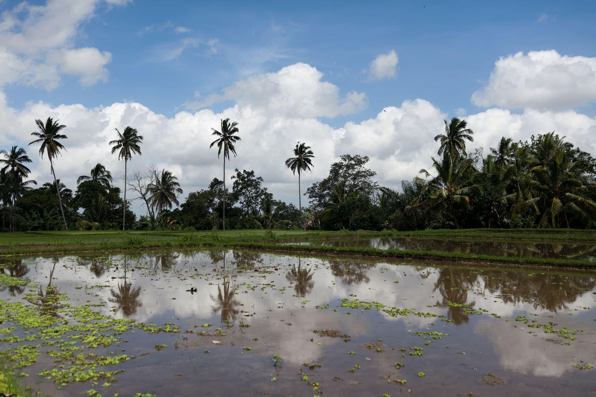 Hike through the rice paddies in Ubud, Bali, Indonesia.