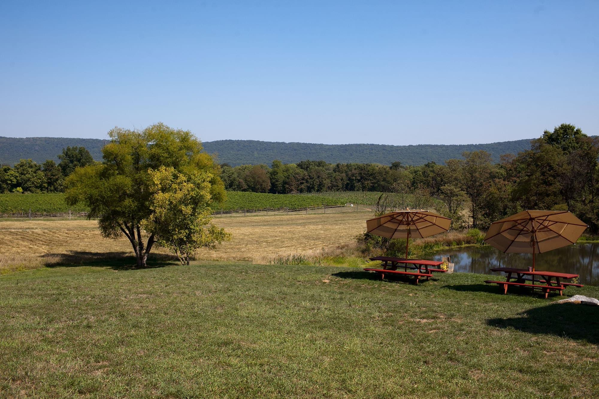 Virginia/North Carolina Road Trip - Notaviva winery in Virginia