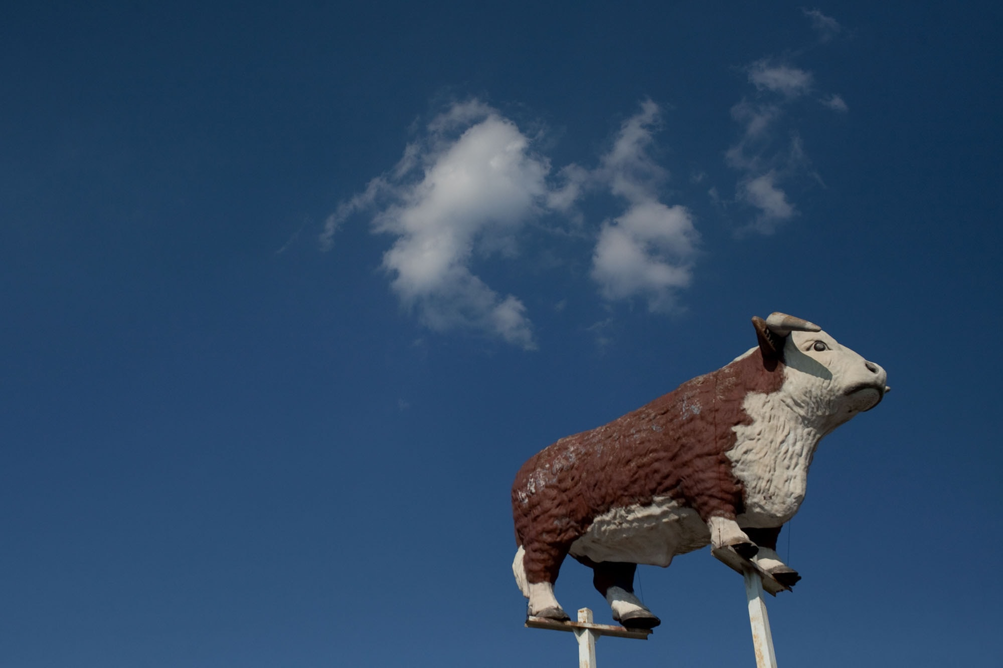 Virginia/North Carolina Road Trip - Cow in the Sky