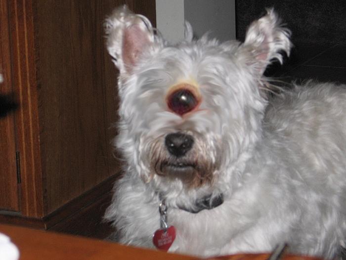 Lukeclopes: A cyclopes dog
