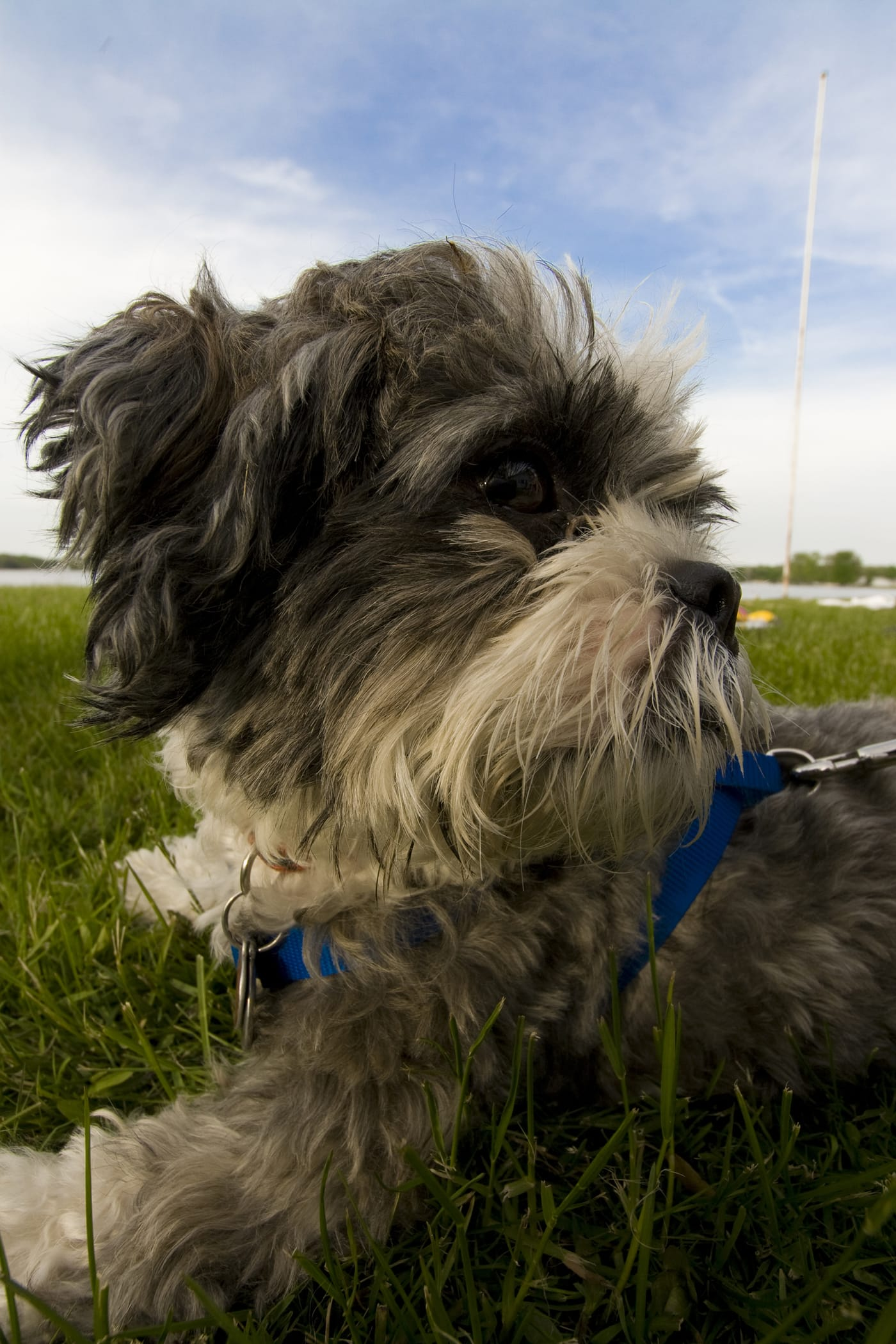 Luther the dog on the lake - Memorial Day Weekend in Decatur, Michigan