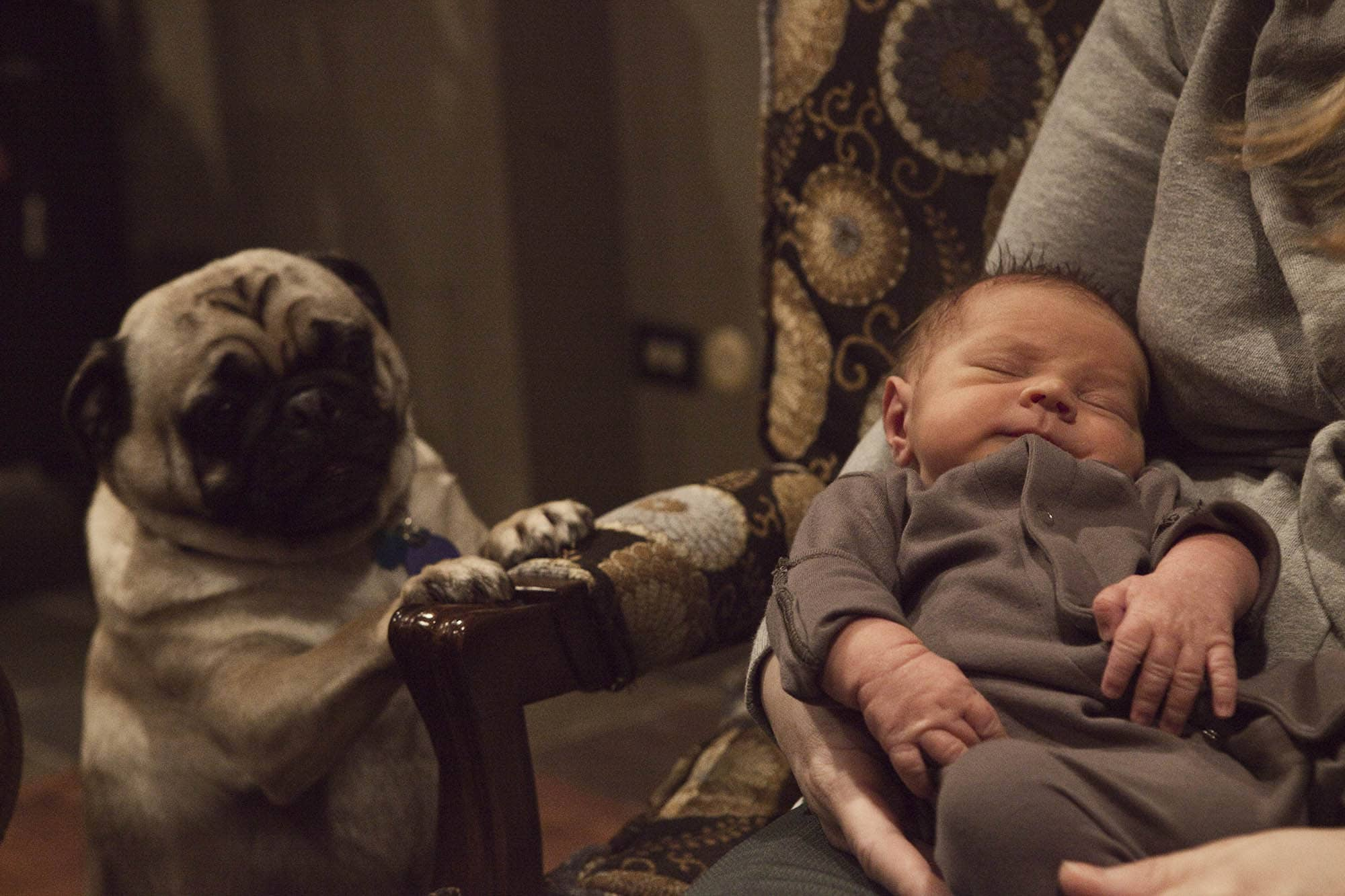 A baby and a pug