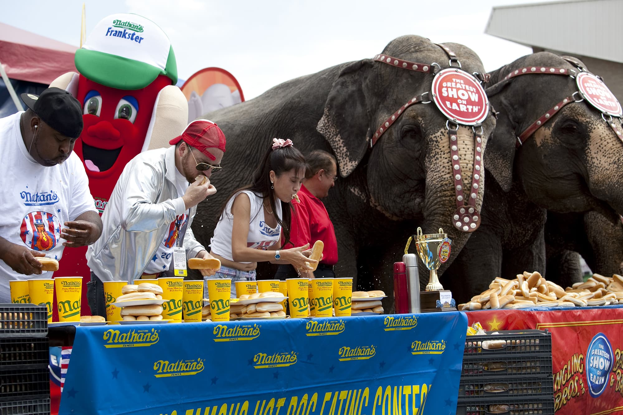 Human vs. Elephants eating contest on Coney Island