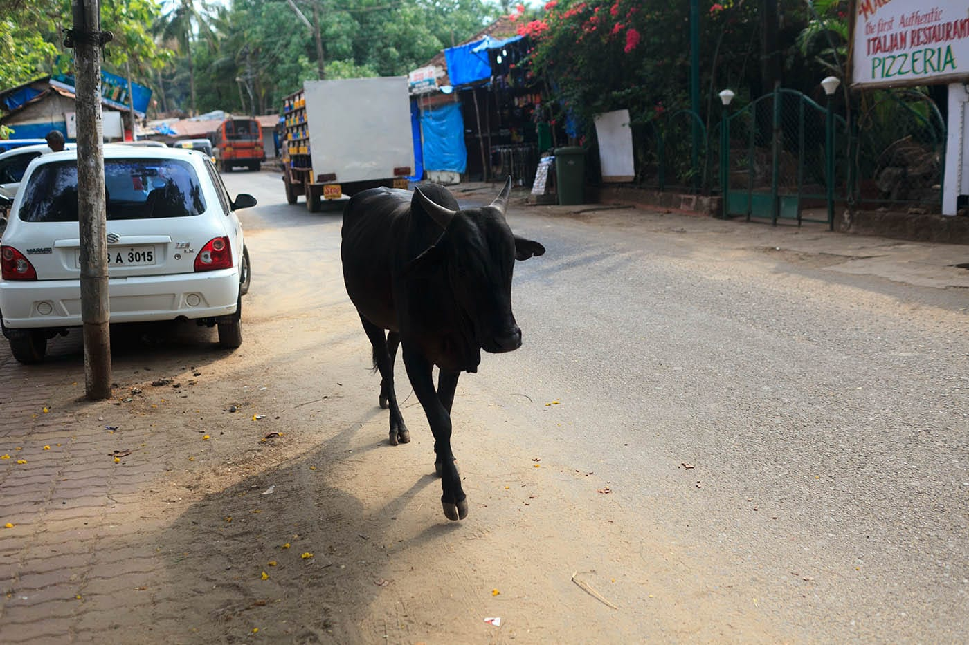 Cow on the road in Palolem, Goa, India.