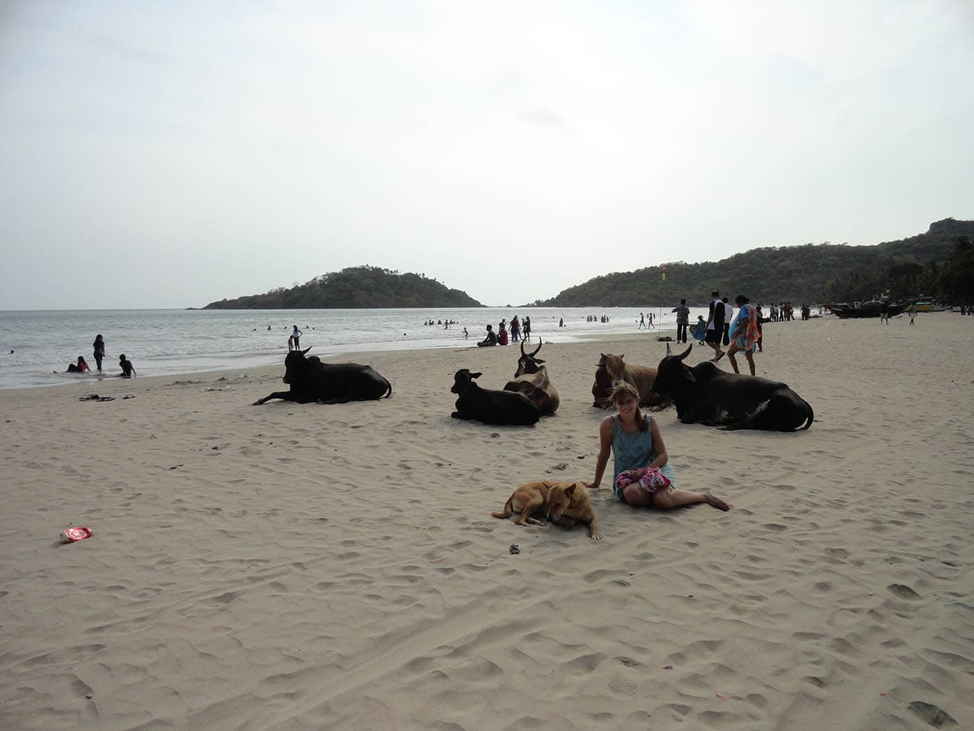 Sitting with dogs and cows on the beach in Palolem, Goa, India.