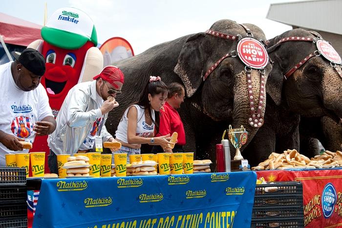 Human vs. Elephant Eating Contest