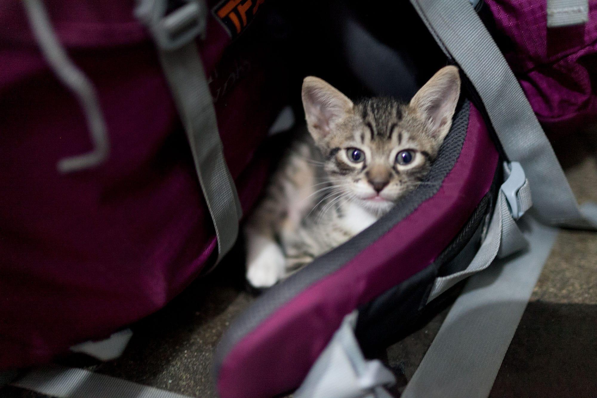 Kittens in León, Nicaragua