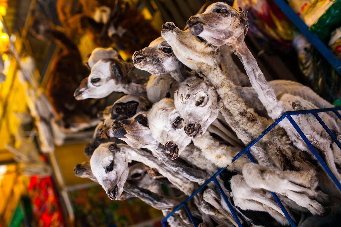 Llama fetus at the Witches' Market in La Paz, Bolivia