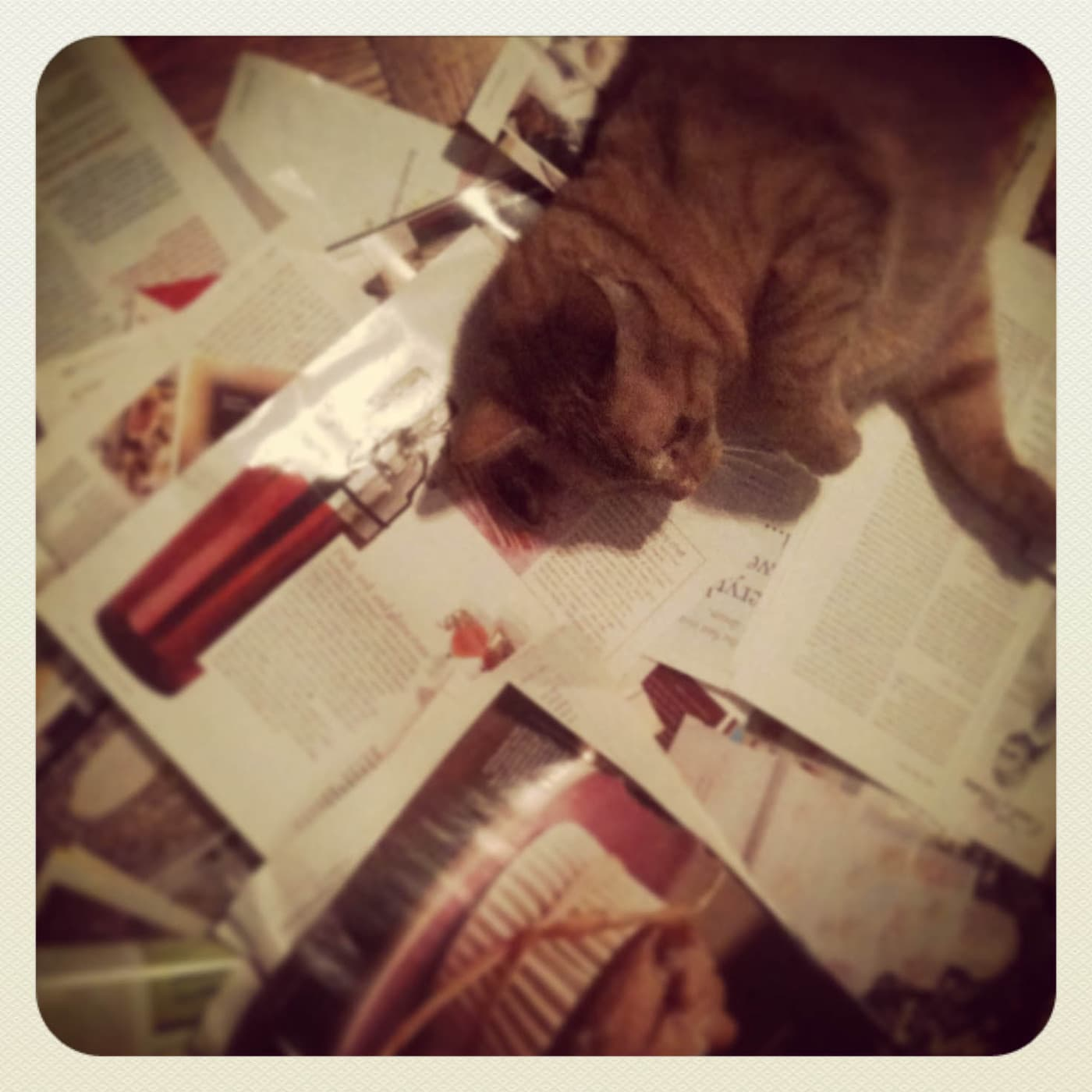 Photo from 2012, the last time I started organizing my recipes. Cat tried to help.