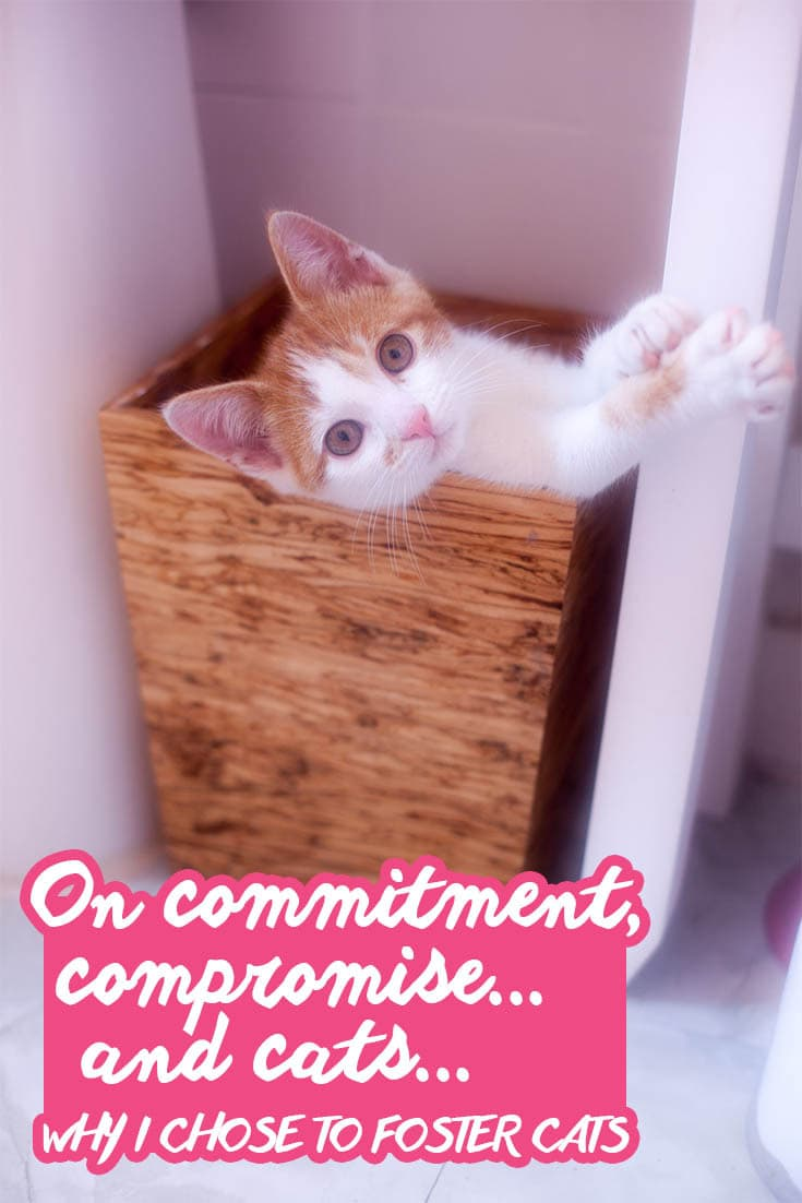 On commitment, compromise...and cats... | Why I Chose to Foster Cats