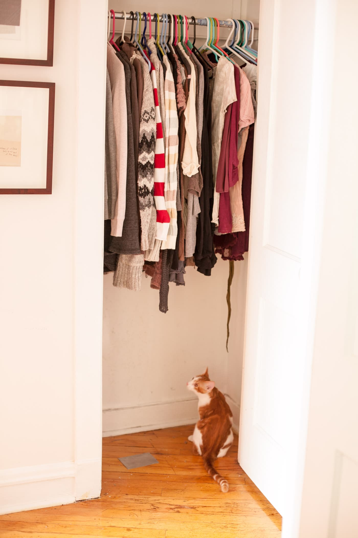 AFTER In the most dramatic transformation of all, the hall closet no longer has a shoe rack (all my shoes now fit on one in the bedroom closet), no longer has a hanging storage rack, has a smaller selection of hanging clothes with room to breathe, and contains only one cat.