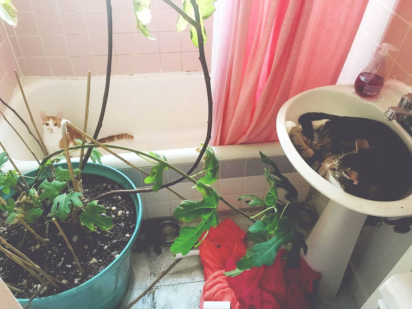 The cats got in the bathroom, and the plant. Chaos ensued.