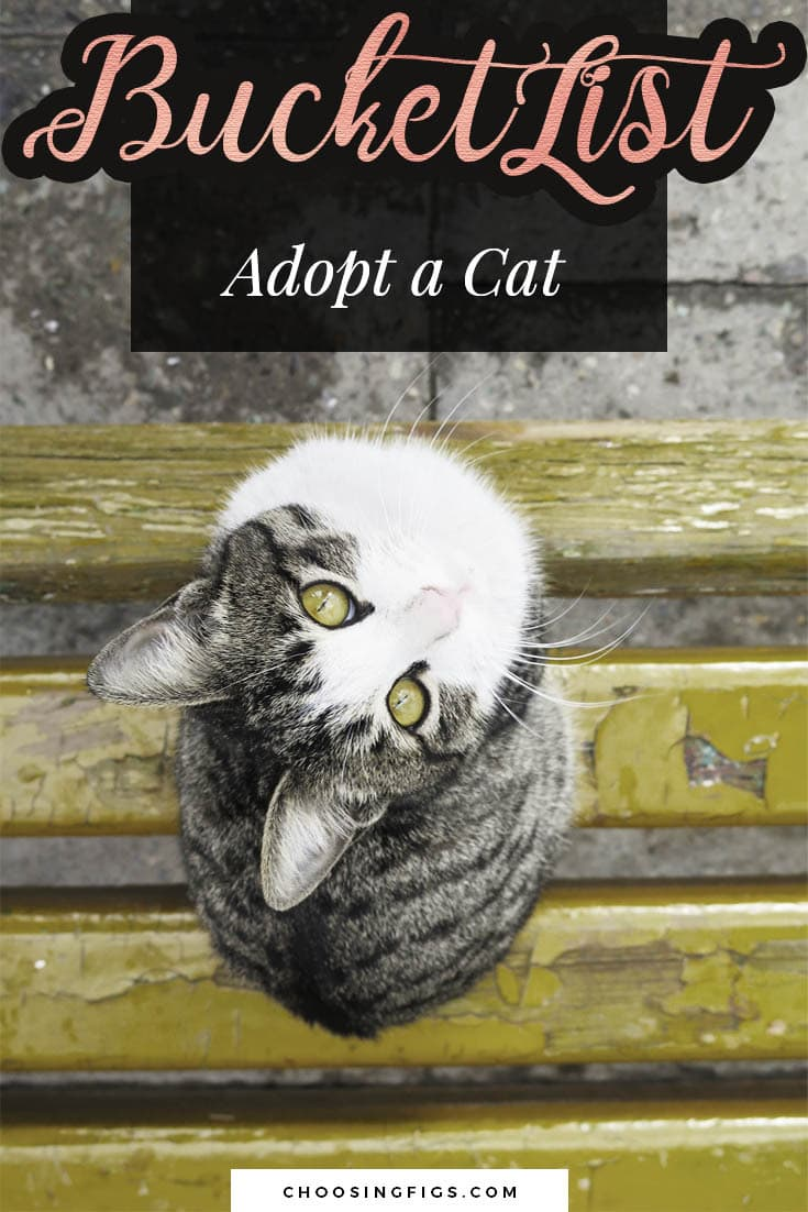 BUCKET LIST IDEAS: Adopt a cat.