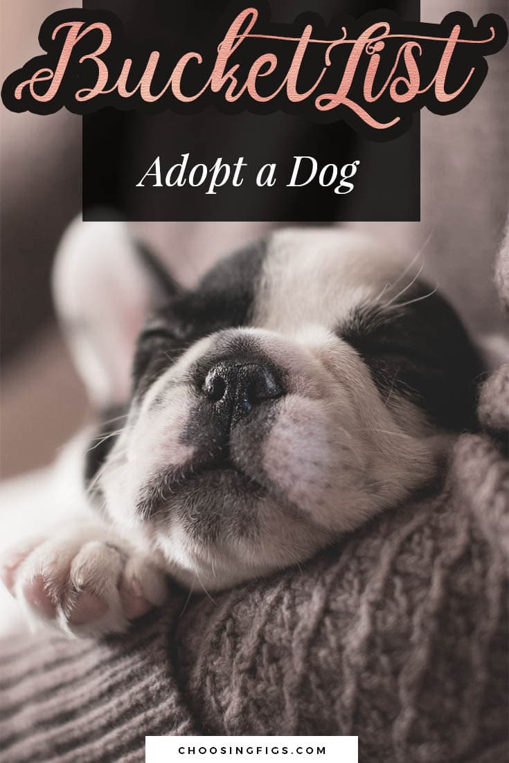 BUCKET LIST IDEAS: Adopt a dog.