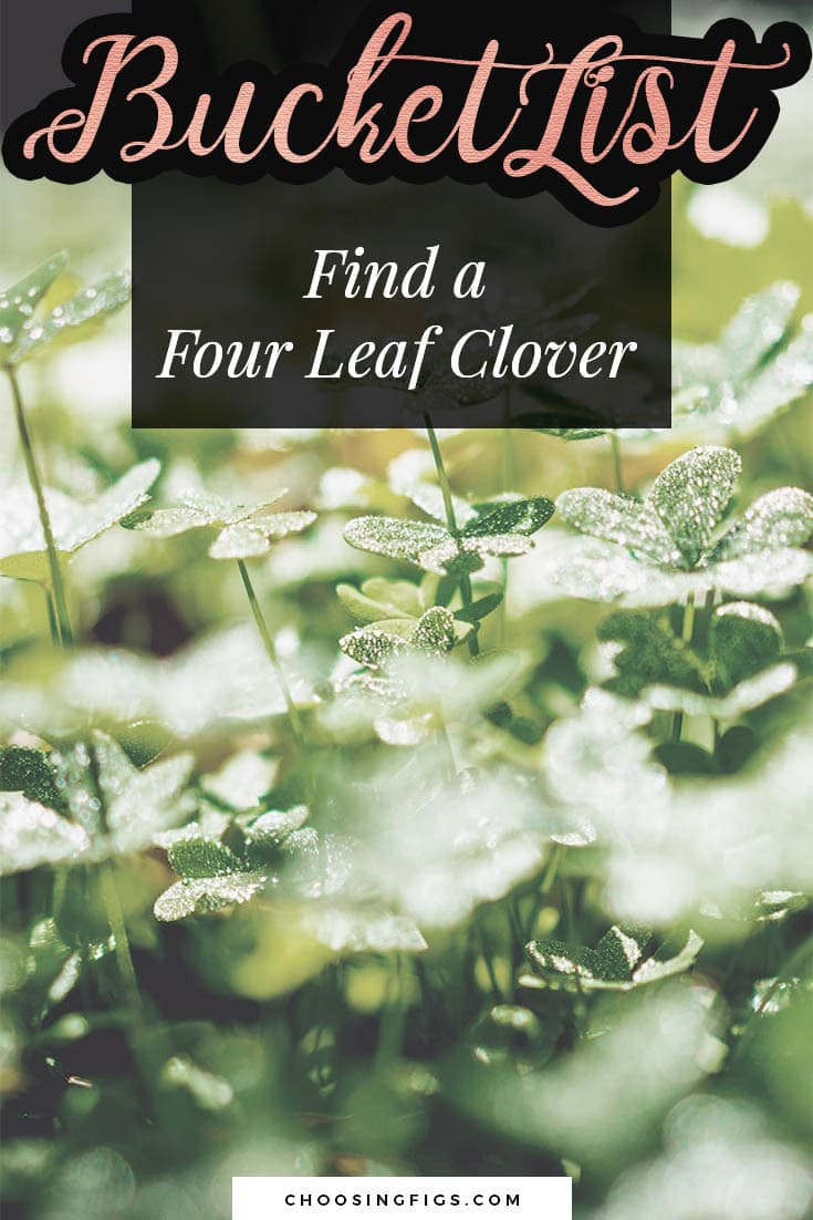BUCKET LIST IDEAS: Find a four leaf clover.
