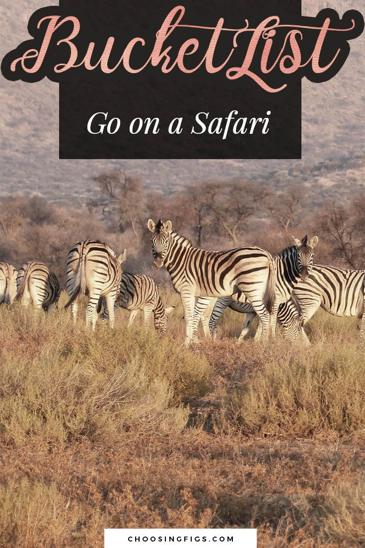 BUCKET LIST IDEAS: Go on a safari.