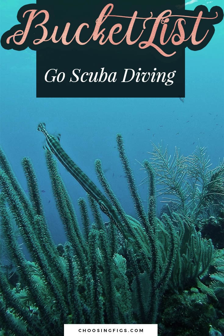 BUCKET LIST IDEAS: Go Scuba Diving.