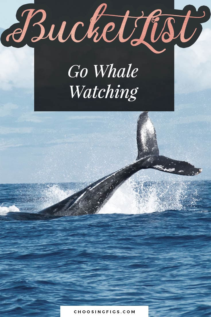BUCKET LIST IDEAS: Go whale watching.