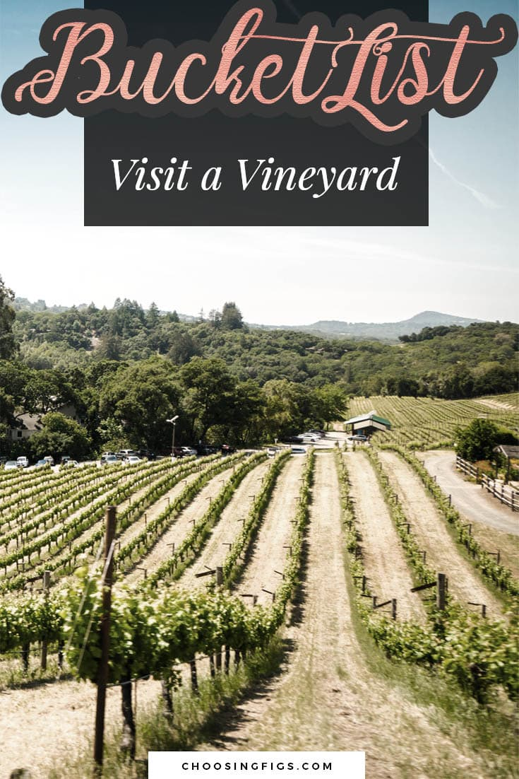 BUCKET LIST IDEAS: Visit a vineyard.