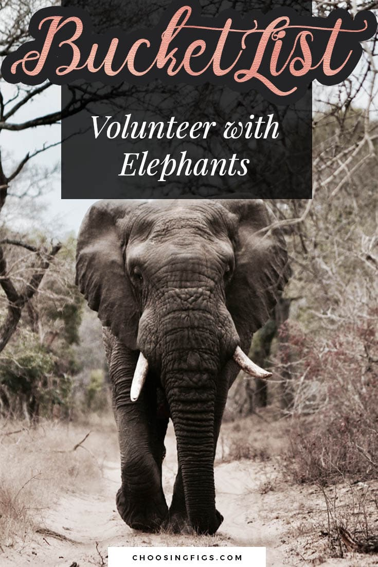 BUCKET LIST IDEAS: Volunteer with Elephants.