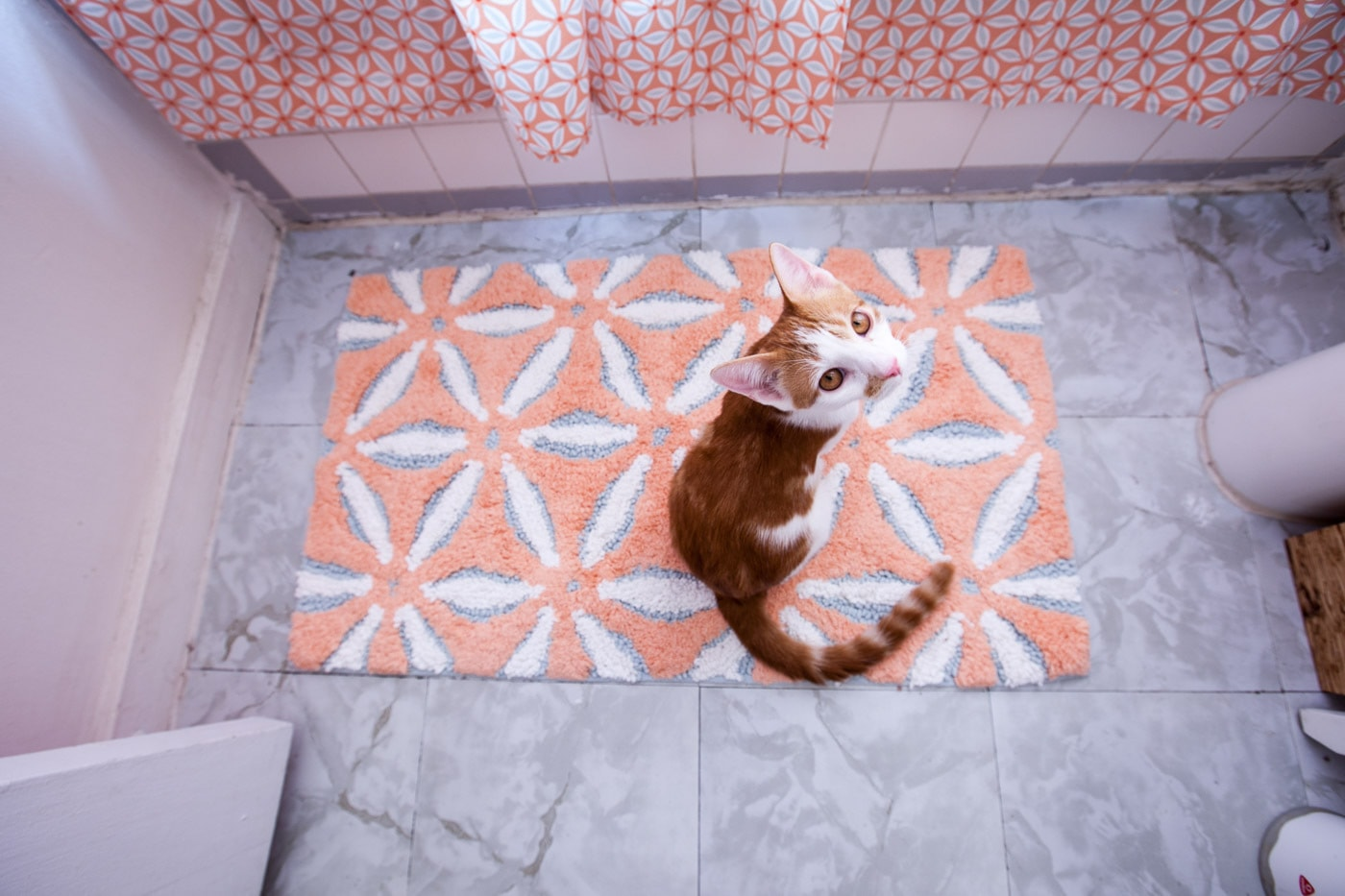 Cat with new pink and blue bath mat and shower curtain for my pink bathroom.