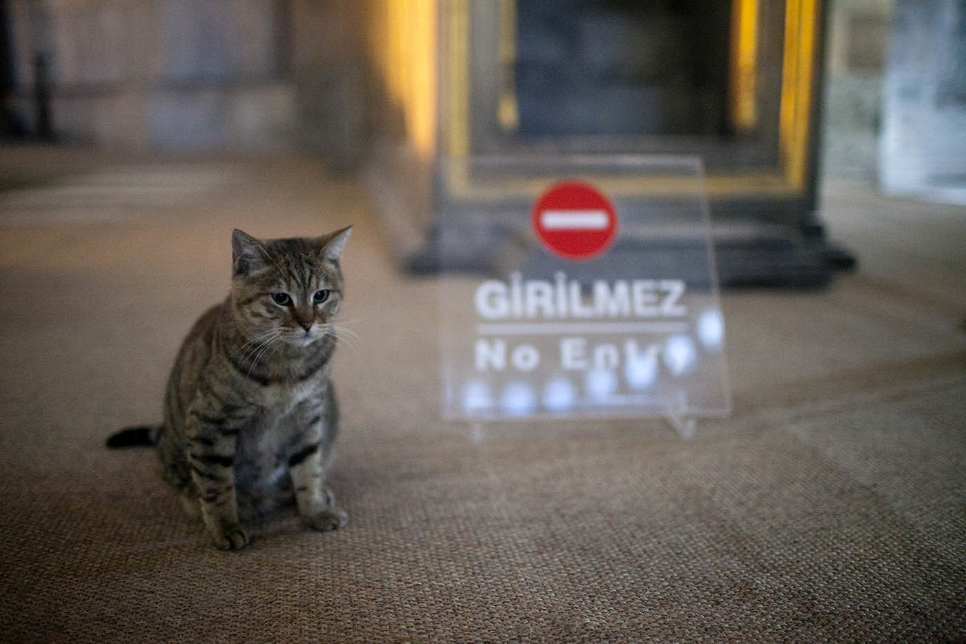 Cats inside Hagia Sophia In Istanbul, Turkey.